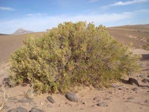 Altiplano landscape, Nor Lipez. G. Ruesgas