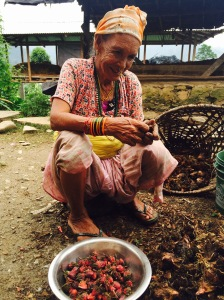Aama (mother) separates cardamom from flowers – harvest season in Salakpur